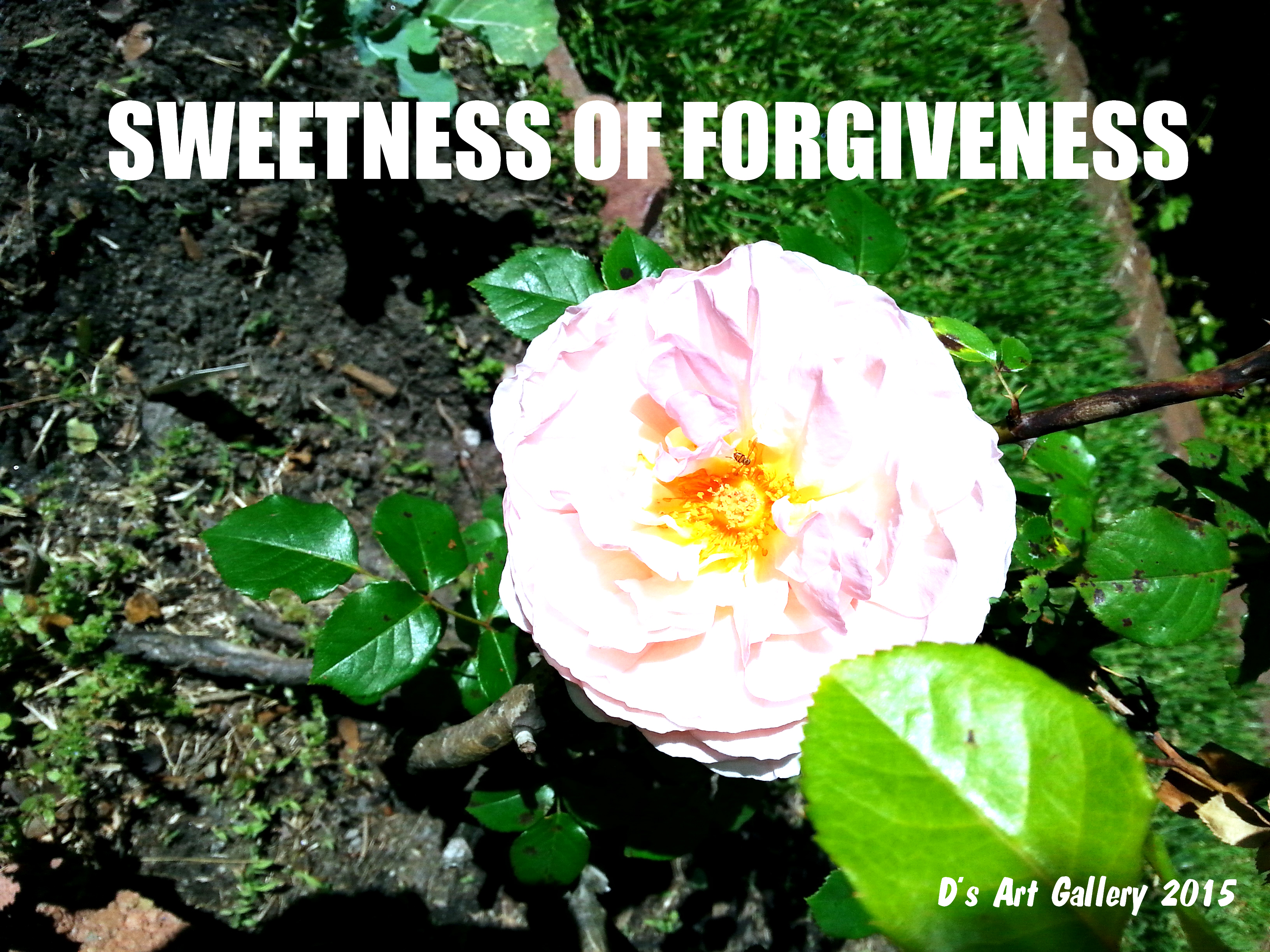 TASTE THE SWEETNESS OF FORGIVENESS (Photo by Pastor Davis)