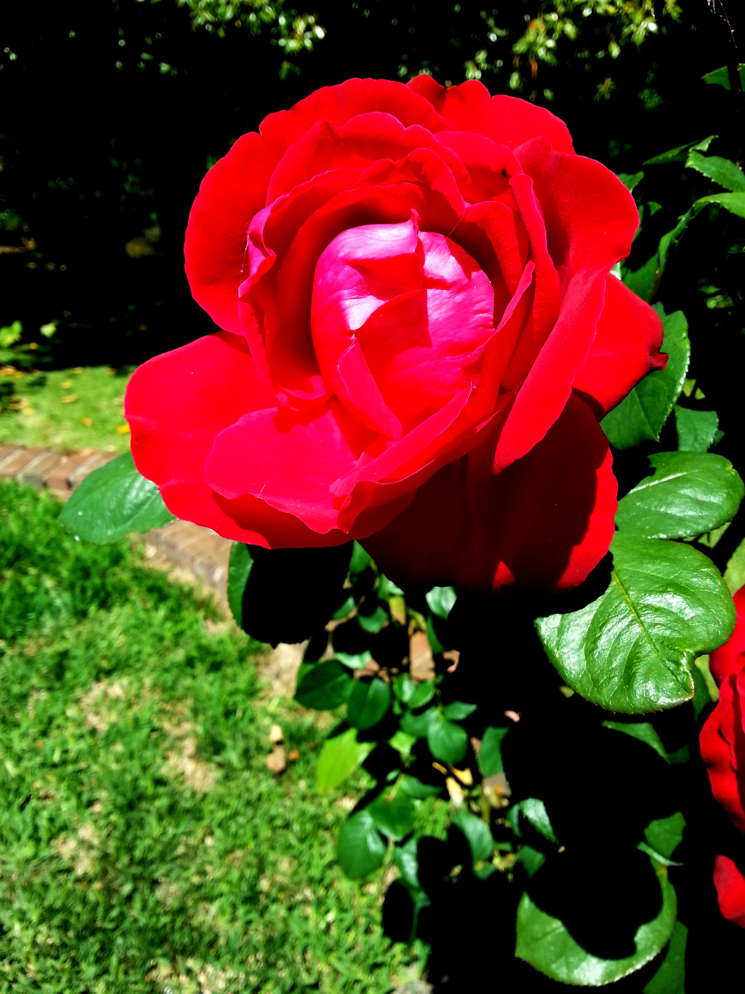OFFERING THE ROSE OF FORGIVENESS (Photo by Pastor Davis)